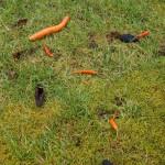 Chillis, Karotte und Kohlestücke