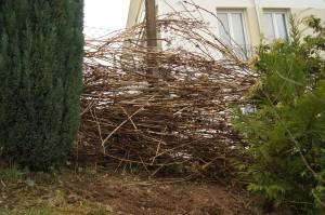 Lange Zweige der Hortensien, aufgeschichtet als Sichtschutz