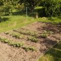 Linkes Beet im Hausgarten