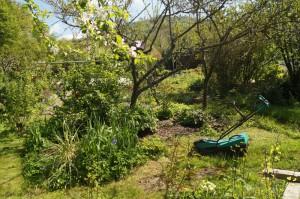 Ecke im Kleingarten mit Pfirsichbaum