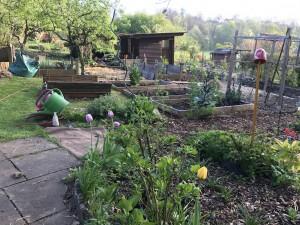 Abendstimmung im GartenGarten