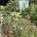 Blumenwiese im Beet mit Kohl