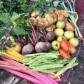 Auf dem Tisch sind: Stangenbohnen, Rote Beete, Mangold, Baumspinat, Äpfel, Lauchzwiebeln, Tomaten und Riesenkartoffeln