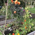Gemüsebeet mit Brunnenkresse